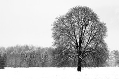 Black & White Winter Tree (diamir8000) Tags: winter bw white detail tree monochrome canon landscape geotagged austria blackwhite dornbirn branches landschaft weite weiss baum badweather lauterach 105mm vorarlberg ried wolfurt canoneos400d platinumheartaward sigma10528exdgmacro lautercherried gettyimagessalq1