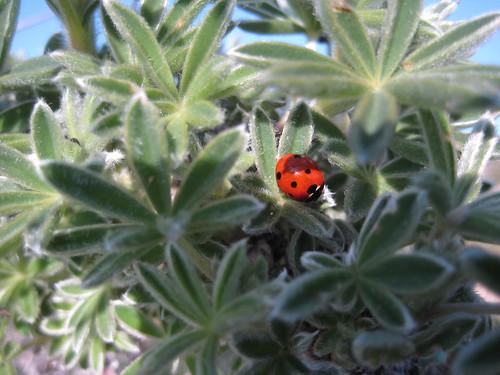 Oh sweet ladybug