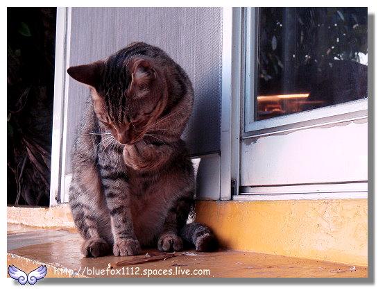100109淡水09_桂豫花園的貓