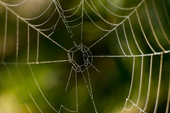 Spiderweb pattern with dew drops