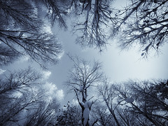 In The Snowy Birch Forest (Joni N) Tags: blue trees winter sky bw white snow black cold tree ice nature contrast forest finland dark frost glow artistic pentax branches shapes wideangle trunk nordic birch toned birches sigma1020mm 10mm sigma1020 k10d pentaxk10d