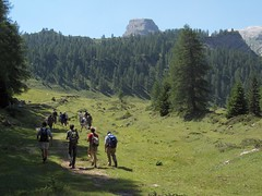 wandering on the alps (the rik pics) Tags: park trees parco mountain alps verde green alberi walking walk gita alpi montagna trentino passeggiata camminare parcoadamellobrenta