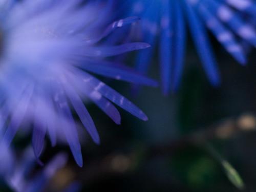 Day 27 - Flower