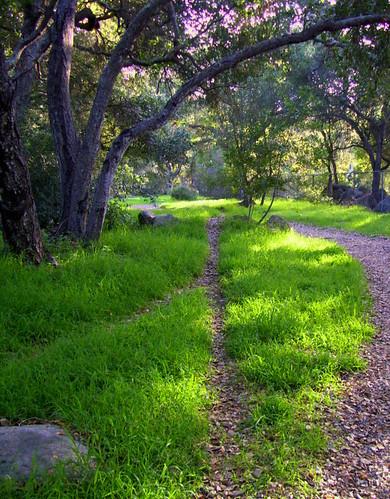 Paths through Rocky Nook