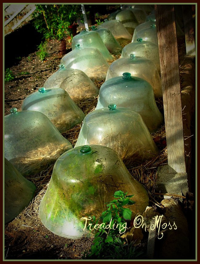 French Cloches