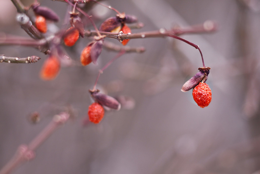 berries-analogous