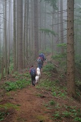 Fog on the trail