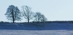 Skyline trees (tina negus) Tags: trees winter snow skyline landscape horizon lincolnshire fields barkston