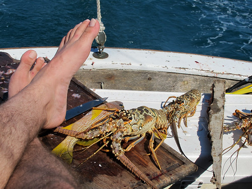 Marching Lobster and Feet while Sailing in Belize