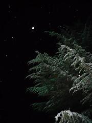 Winter night snow magic (Mammaoca2008) Tags: snow tree pine night neve fir albero pino abete notte