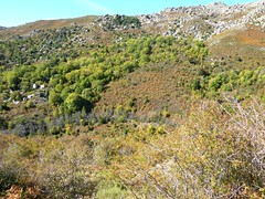 Sentier du ruisseau de San Petru : l'épine-vinette