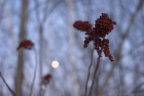 berry moon