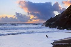 Playtime Surf - Marin Headlands, San Francisco (Darvin Atkeson) Tags: ocean california sunset usa dog storm beach america us sand surf pacific marin cliffs beaches headlands rodeo    darvin atkeson  darv   liquidmoonlightcom