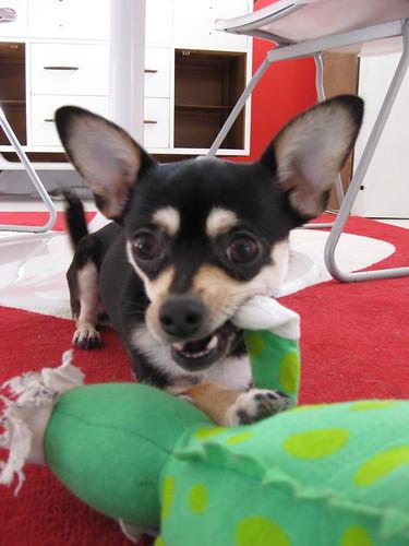 Chloe - 1-28-2010