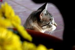 (*mar*) Tags: cat honeymoon honey gato vicente odeceixe algarve alentejo costavicentina alentejoalgarve
