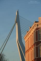 Noordereiland (Peet de Rouw) Tags: bridge rotterdam brug erasmusbrug noordereiland zwaan peet denachtdienst peetderouw peetderouwfotografie