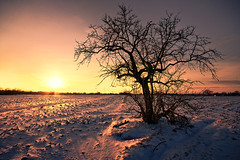 tree & snow 2 (Dennis_F) Tags: schnee winter light sunset shadow sky orange snow tree nature yellow germany deutschland licht cozy warm ast sonnenuntergang sundown angle bright branches sony natur hell wide himmel sigma wideangle dirt gelb dslr karlsruhe ste 1020 ultra baum heide dreck uwa ultrawideangle sigmalens a700 sigma1020 uww sonyalpha sonydslr neureut alpha700 sonya700 sonyalpha700 dslra700 sigma1020456 sigmaobjektiv