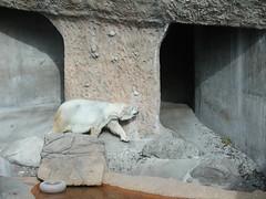 Zoo of Denver  DSCN0141_1