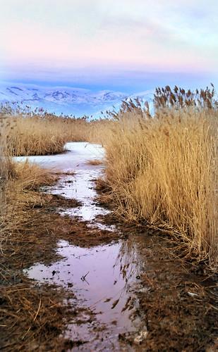 Utah lake pathway in reeds crop