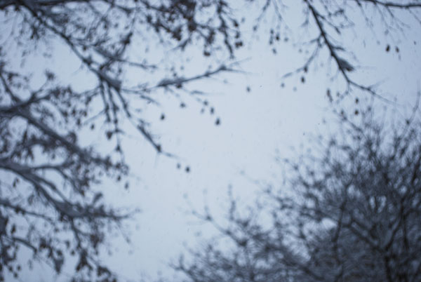 blurrytreesm