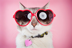 loverboy (mosippy) Tags: pink love cat studio hearts valentine doo myfunnyvalentine catlove stuffonmycat alienbees 2470 heartsunglasses beautydish 5dii catwithsunglasses