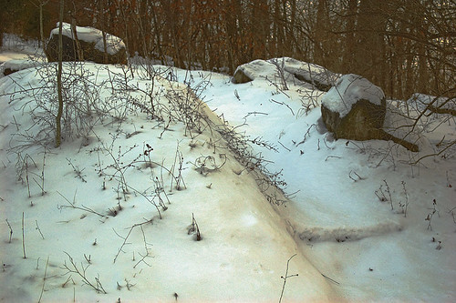 Emmenegger Nature Park, in Kirkwood, Missouri, USA - snow-covered trail