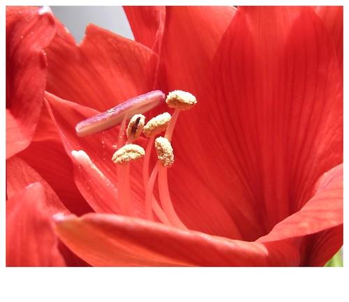 Valentino flower