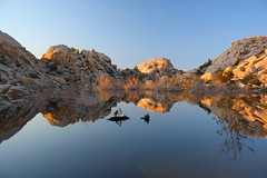 Barker Dam Reflections (Terry.Tyson) Tags: california nature walking landscape desert hiking hikes joshuatreenationalpark