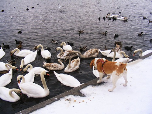 Dog and waterfowl.