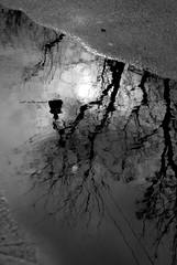 Riflesso di due esami passati. (Lost in the moment.) Tags: acqua pozzanghera rifelsso