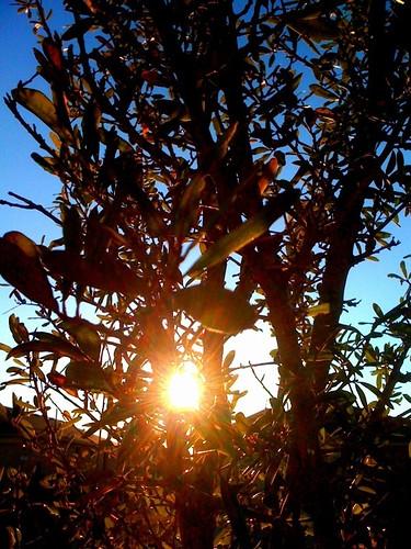 2-18-10 iPhone photo