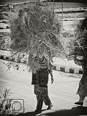 """""""You can turn painful situations around through laughter. If you can find humor in anything, even poverty, you can survive it."""" (Muhammad Fahad Raza) Tags: poverty street wood girls pakistan high women key day afternoon sunday poor working streetphotography sunny stack highkey fuel sunnyday islamabad pathan sunnyafternoon dhok pakhtoon pushtoon photographjy kantraal poorpathangirl poorpukhtoongirl dhokkantraalislamabad"""