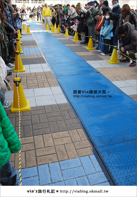 【via關西冬遊記】大阪海遊館~冬季限定!無敵可愛企鵝遊行來囉!11