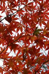 Leaves2 (matthewgrocott) Tags: