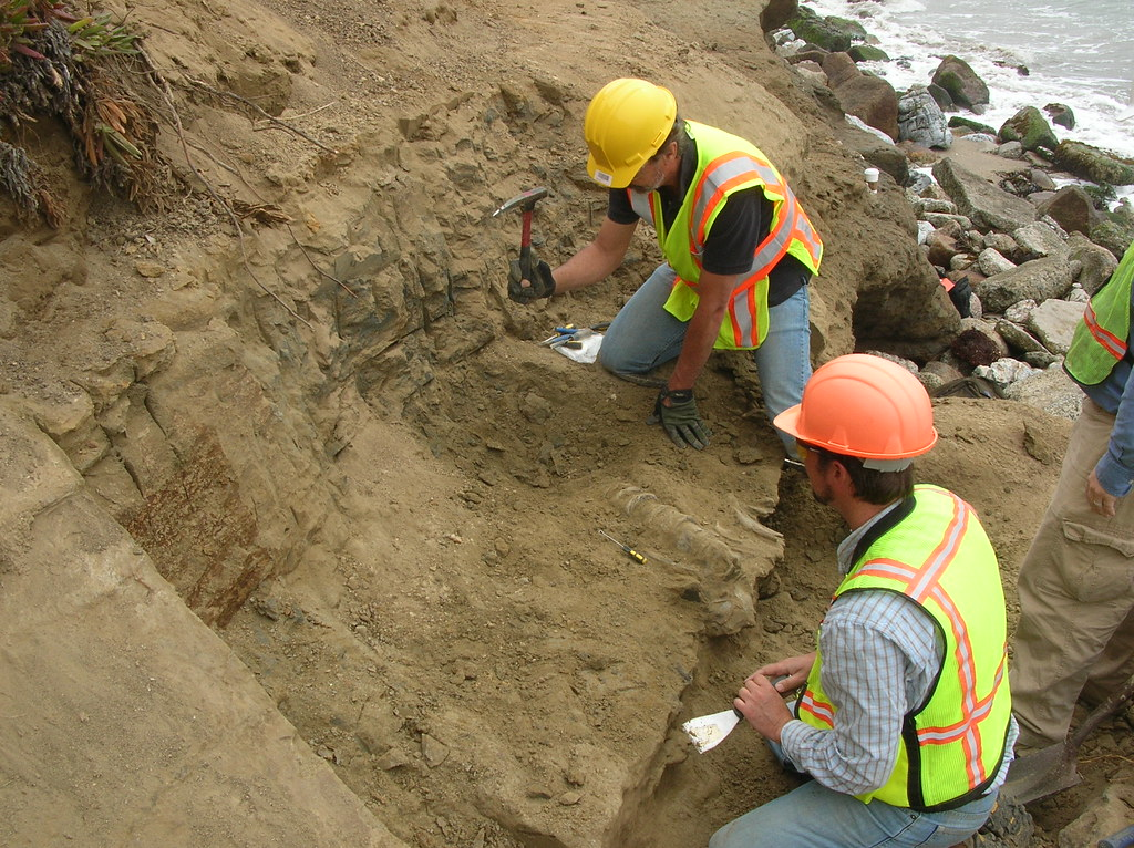 Whale Excavation I
