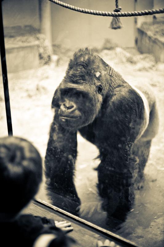 Zoo (11 of 15)