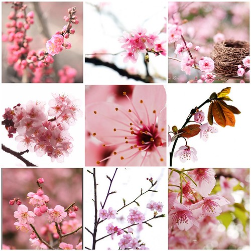 Things i ♥ Thursdays - 07| Spring Bloom... (by Kate Yasnaya)