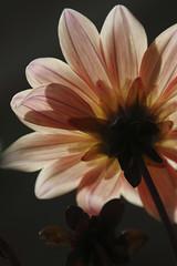 IMG_7606 co sm (Trudy -) Tags: orange flower reflection nature dc washington flora melon trudy nationalarboretum truelulu