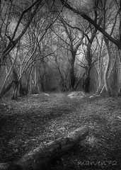 Bewitched (Marco Venturin Photography) Tags: bw white black tree forest d50 nikon albero bianco nero foresta bewitched stregata marven72