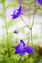 Purple in the green (Senzio Peci) Tags: life italy flower macro verde green nature italia purple natura sicily fiore viola sicilia vita paternò intothedeepofmysoul