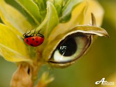 My Eye (ZiZLoSs) Tags: eye photoshop canon eos ladybug usm edit aziz abdulaziz  f56l 450d zizloss  canoneos450d ef400mm 3aziz almanie abdulazizalmanie