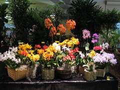 Sunset Valley Orchids display (cieneguitan) Tags: orchid flower flora lan bunga orkid anggrek okid