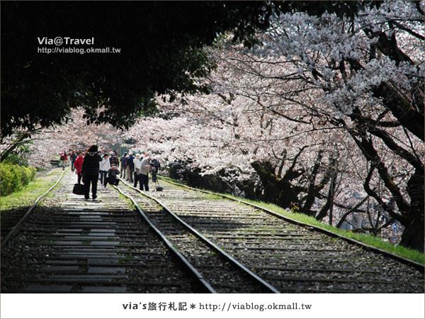 【via京都賞櫻行】鐵道上的櫻花美景~蹴上鐵道16