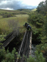 Measuring the Old North Rumphi Bridge, Nyika National Park