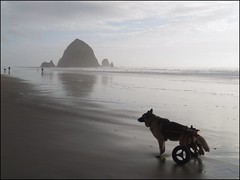 Resting spot (i5prof) Tags: dog oregon cannonbeach haystackrock reflexions makingtracks ourdailychallenge dogwithwheelsforlegs