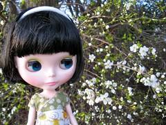 look! spring flowers!