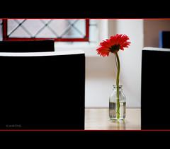 A Piece of Art (.MARTINE.) Tags: flower window museum table restaurant utrecht chairs hips raam martine bloem tafel stoelen centraalmuseum refter canoneos40d beentherebefore flickrgolfclub clanflickr