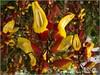 Flores (Fernando Reyes Palencia) Tags: flores guatemala paisajesdeguatemala bellospaisajesdeguatemala fotosdeguatemala bellaguatemala paisajesdelmundo guatemalalandscapes imagenesdeguatemala guatemalapaisajes postalesdeguatemala