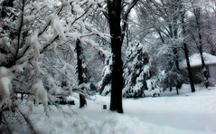 Snow (blmiers2) Tags: snow newyork nature geotagged nikon faves d40x blm18 blmiers2