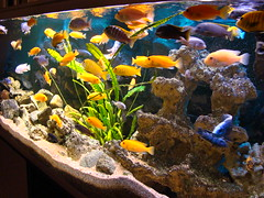 DSC04307 (When The Levée Breaks) Tags: fish acquarium fishtank